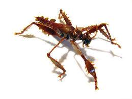 Bug Art: Tiny Glass Insect Sculptures