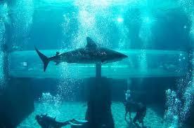 underwater water slide. Modren Slide Aquaventure Water Park At Atlantis Paradise Island Slide Tunnel  Through Shark Tank Intended Underwater Slide