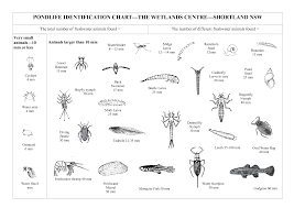 Guide For Identifying Pond Microorganisms
