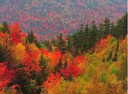 Risultati immagini per colori foglie autunno
