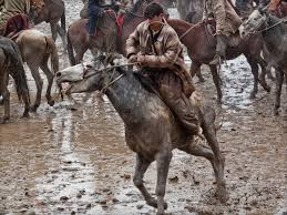 horse rider insurance quotes 44billionlater