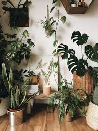 amazing indoor jungle ideas to home