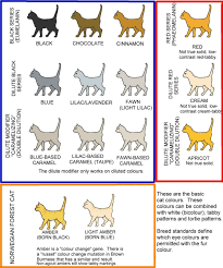 Sphynx Cat Color Chart Colour And Pattern Charts Cat Colors Tonkinese Cat Devon