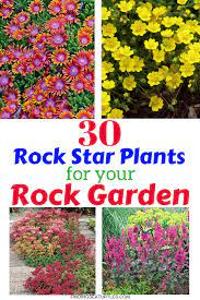 30 rock garden plants that perform like