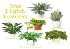 office plants no light. Best Office Plants No Sunlight Low Light Loving Houseplants Perfect For A Small Apartment With Little