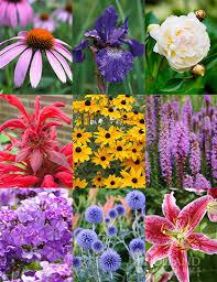 perennial cutflower garden holland
