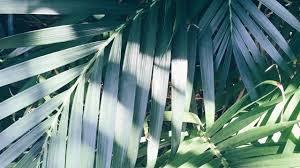 palm tree pool Tumblr