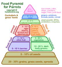 Cockatiel Diet Chart Cockatiel Food Pyramid Food Pyramid Parrot Bird Food