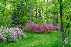 bryan park azalea flower garden