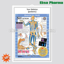 Human Skeleton Wall Chart 3d Medical Human Anatomy Wall Charts Poster Your Skeleton Pediatric Buy 3d Chart Human Anatomy Wall Poster Pediatric Skeleton Product On