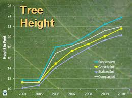 Oak Tree Growth Rate Chart 29 High Quality Oak Tree Size Chart