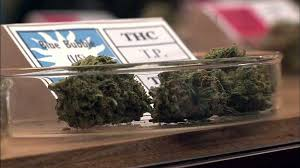 should marijuana be legalized essay brilliant essay marijuana should be legalized essay
