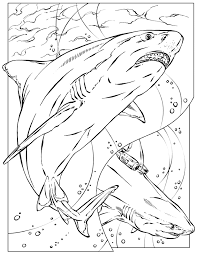 Small Picture Mean Shark Coloring Page Coloring Coloring Pages