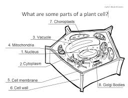 Plant Cell Coloring Worksheet Answers Label Plant Cell Parts ...