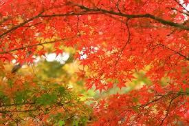 「西沢 渓谷 紅葉」の画像検索結果