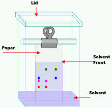 Paper Chromatography Wikipedia