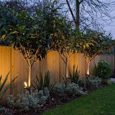 Uplit Trees  Adding Interest Along The Fence In The Furthest Good Trees For Backyard