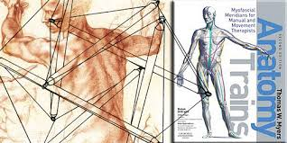 Image result for tom myers anatomy images