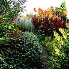 Small Picture Using Color to Create a Tropical Garden Tropical garden Unique