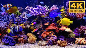 THE BEST 4K Aquarium Video ...