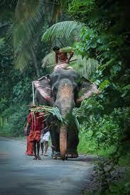 Kerala Elephant Pictures