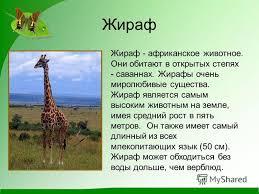 Презентация на тему Рассказ о животных Окружающий мир В класс  2 Жираф