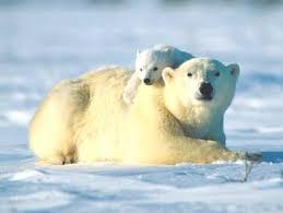 Единая контрольная работа Контент платформа ru bear hug 1600x1200 jpg