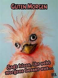 Guten Morgen Lustige Sprüche Freitag Ribhot V2