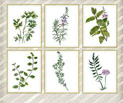 9 herb wall art watercolor herbs print herb wall art kitchen wall decor kitchen herbs art