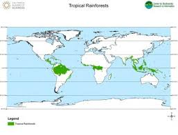 The soil isn't very fertile as heavy rain washes nutrients away. Tropical Rainforest Biomes Article Khan Academy
