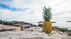 pineapple wallpaper. 2560x1440 wallpaper pineapple, rocks, beach pineapple