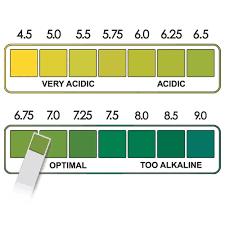 Reagent Strips For Urine Test Buy In Vitro Urine Protein Reagent Test Strips Urine Ketone Test Strips Urine Ma Test Strips Product On Alibaba Com
