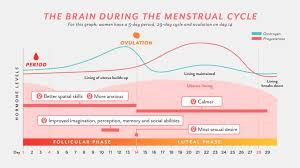 Female Menstrual Cycle Flow Chart How The Menstrual Cycle Changes Womens Brains For Better