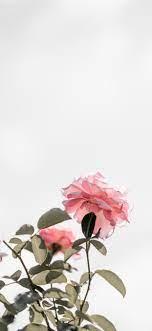 Iphone 11 Wallpaper Roses – WallpaperShit
