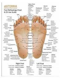 Free Foot Reflexology Charts 35 Free Printables Word Pdf