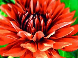 it s a dahlia show your essentials creations essentials café painterfactory com