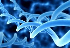 Znalezione obrazy dla zapytania genetyka