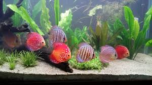 Image result for let professionals do your aquarium