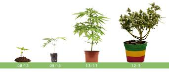 Cannabis Plant Growth Chart The Ideal Ec Range For Cannabis Plants Cannaconnection Com