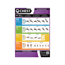 Chest Chart Gym Posterfit Chest Chart