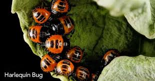 Bad Garden Pests Identifying And Controlling Garden Bugs