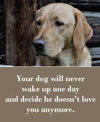 Dog Quotes Love And Loyalty Interesting 48 Dog Sayings Which Will Touch Your Heart Puppies Pinterest