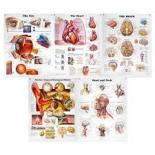 Peter Bachin Organs Structures Chart Set Of 5