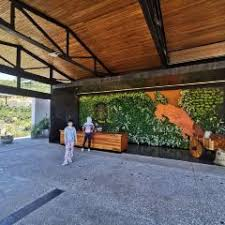 This is a working farm where starbucks grows and harvests arabica coffee beans. Hacienda Alsacia Starbucks Coffee Farm Travel Guidebook Must Visit Attractions In Alajuela Hacienda Alsacia Starbucks Coffee Farm Nearby Recommendation Trip Com