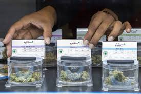 kyle ransom adjusts a display at blÜm las vegas cal dispensary on wednesday march