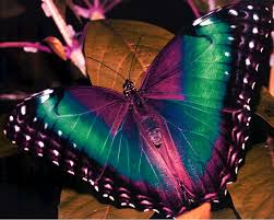 real beautiful colorful butterflies. Exellent Real Colorful Butterflies  Beautiful  Pictures  Butterfly Pictures For Real U