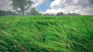 green grass field animated. 0160.png1280x720 1.28 MB Green Grass Field Animated O