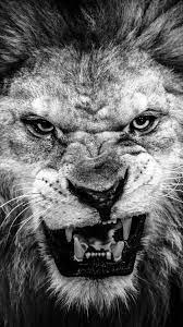 Dark Fierce Lion Face Macro #iPhone #6 ...