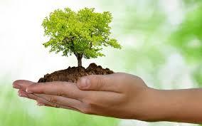 Risultati immagini per piantare albero