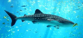 Nama Nama Jenis Ikan Laut Dan Gambarnya